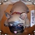 124 Tort pies buldog francuski przestrzenny