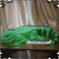 158 Tort jaszczur kameleon iguana duży przestrzenny gad zielone zwierze